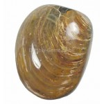 Agate Shell Fossil