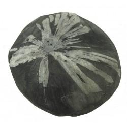 Flowery Chrysanthemum Stone