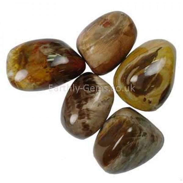 Large Petrified Wood Tumblestones 30-35mm