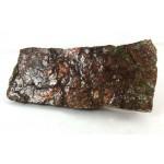 Natural Ammolite Fossil Fragment