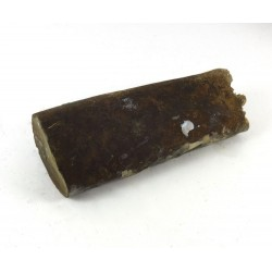 Baculite fossil