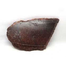 Dinosaur Bone Slice Utah