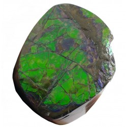 Polished Green Ammolite Section