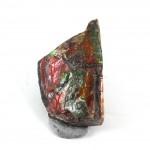 Ammolite Fossil