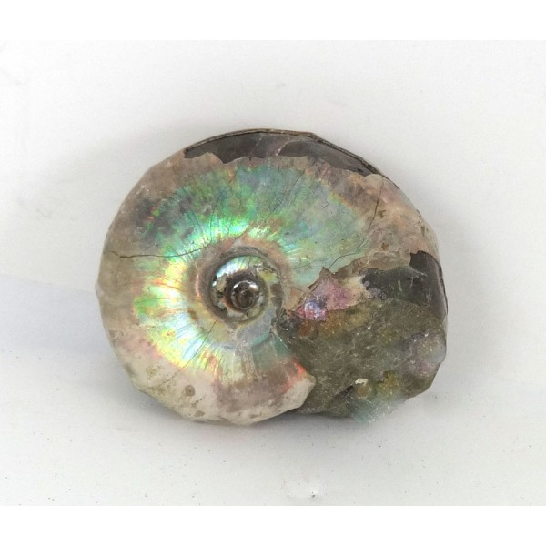 45mm Iridescent Ammonite