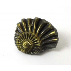 Ammonite Pyritised