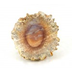 Baryte Polished Face Mineral
