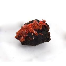 Crocoite Mineral Cluster
