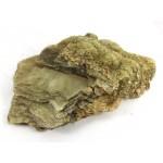 Golden Muscovite Formation
