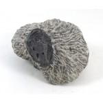 Trilobite Fossil Matrix
