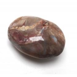 Petrified Wood Pebble