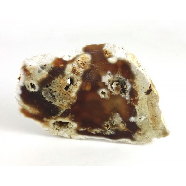 Fossil Coral Agate