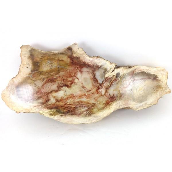 Patterned Petrified Wood Slice