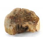 Petrified Wood Wedge