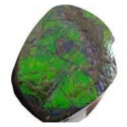 Polished Ammolite Freeforms