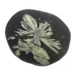 Chrysanthemum Stones